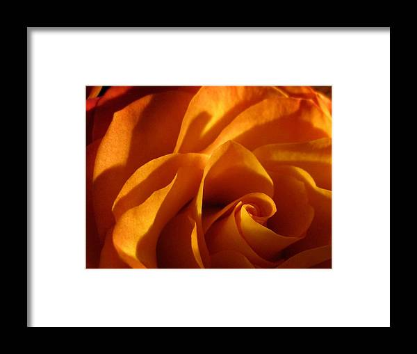 Macro Framed Print featuring the photograph Zowie Rose by Carolyn Jacob