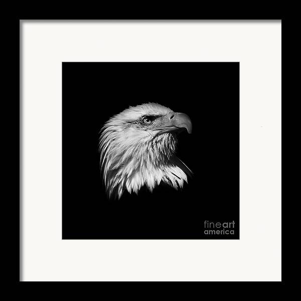 Black And White Framed Print featuring the photograph Black And White American Eagle by Steve McKinzie