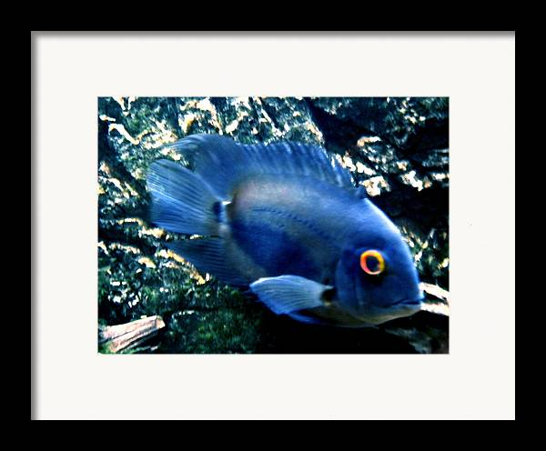 Colette Framed Print featuring the photograph Fish Living In Denmark by Colette V Hera Guggenheim