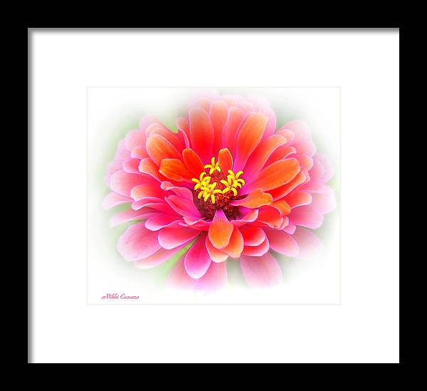 Nature Framed Print featuring the photograph Flower On White by Mikki Cucuzzo