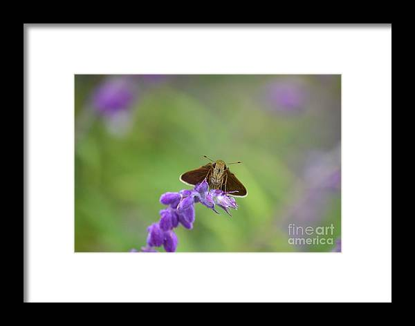 Skipper Butterfly Framed Print featuring the photograph Little Skippers Happy Place by Kathy Gibbons