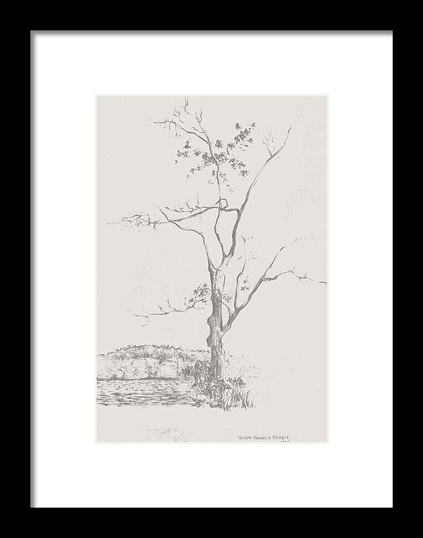 Nature Drawing Framed Print featuring the drawing   Tree In Summerhill Lake by Trudy Brodkin Storace