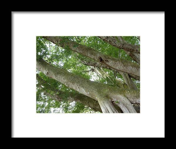 Banyan Tree Framed Print featuring the photograph 058 A Different Point Of View by Carol McKenzie