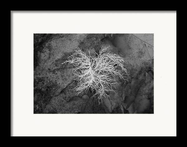 Reindeer Lichen Framed Print featuring the photograph 0802-0013 Reindeer Lichen In The Smith Creek Preserve by Randy Forrester