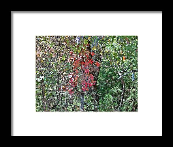 Leaves Framed Print featuring the photograph A Little Color by Regina McLeroy