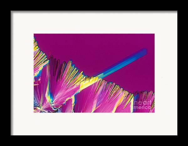Adenosine Triphosphate Framed Print featuring the photograph Adenosine Triphosphate by Michael W. Davidson
