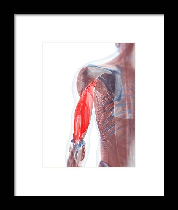 Vertical Framed Print featuring the digital art Biceps Muscle, Artwork by Sciepro