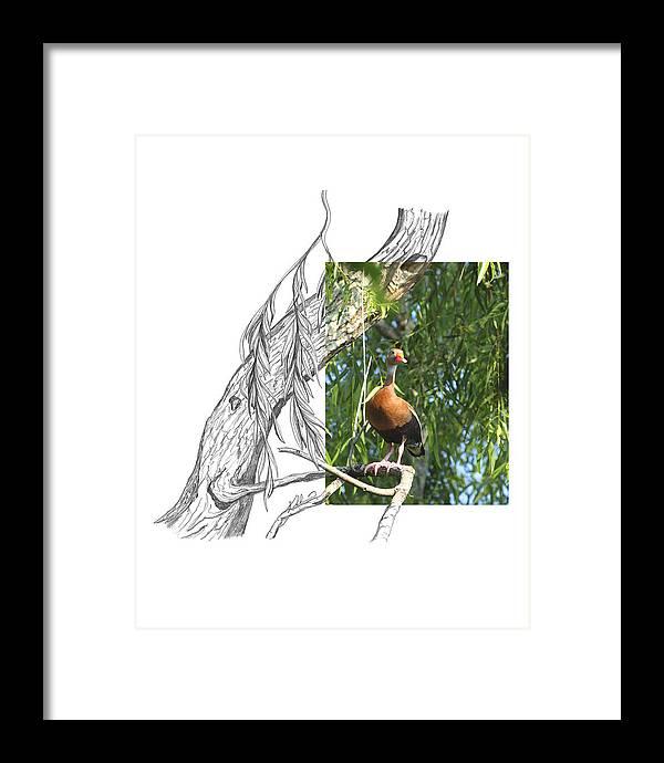 Black-bellied Whistling-duck Framed Print featuring the photograph Black-bellied Whistling-Duck by Andrew McInnes