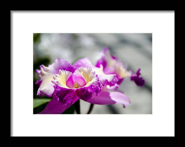 Botanical Gardens Framed Print featuring the photograph Botanical Gardens by Mike Rivera
