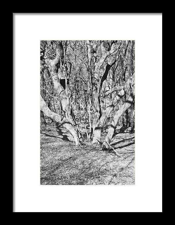 Tree Framed Print featuring the photograph Branches by Gabriela Insuratelu