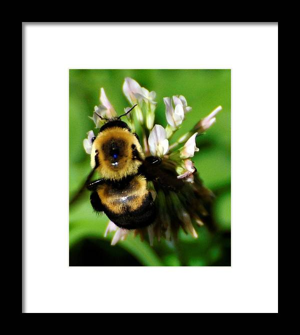 Bee Framed Print featuring the photograph Busy Bee by Terri Albertson
