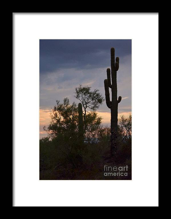 Cactus Framed Print featuring the photograph Cactus Vantage by Patty Descalzi