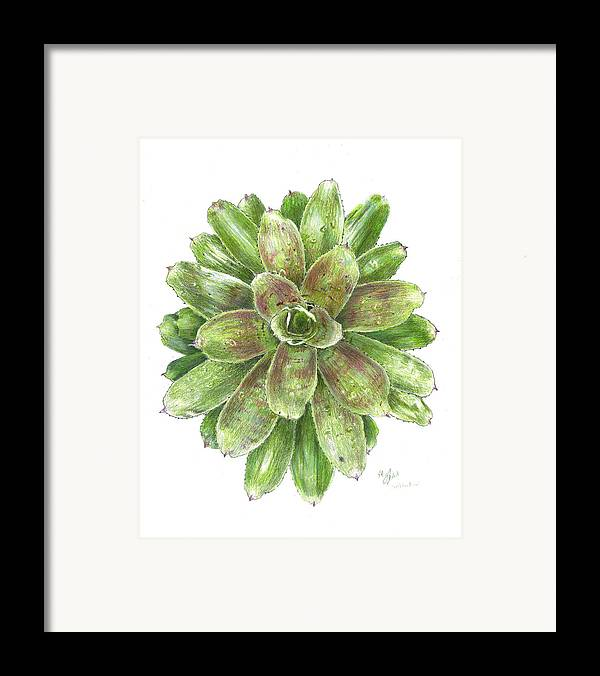 Neoregelia Framed Print featuring the drawing Celebration by Steve Asbell