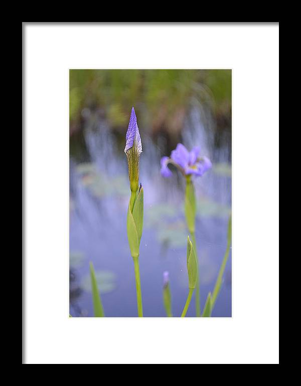 Nature Framed Print featuring the photograph Coronation by Tiffany Ball-Zerges