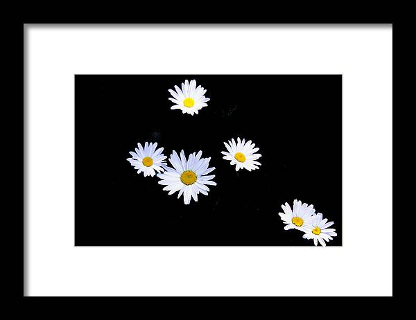 Flowers Framed Print featuring the photograph Daisy by Patrick Kessler