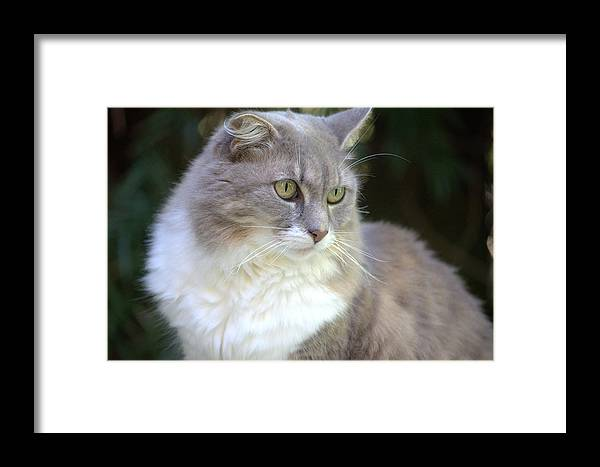 Feline Framed Print featuring the photograph Demure by Fraida Gutovich