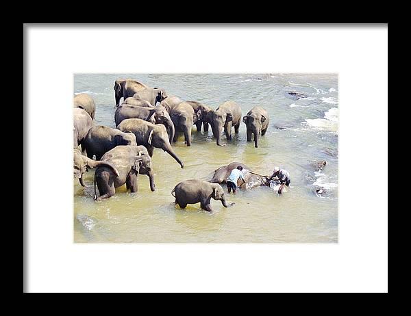 Elephant Framed Print featuring the photograph Elephant Bath by Paul Cowan