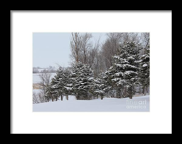Trees Framed Print featuring the photograph Evergreen Trees by Lori Tordsen