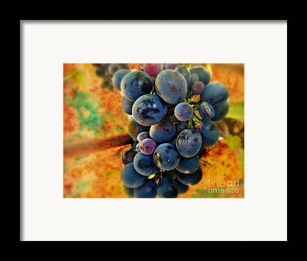 Wine Framed Print featuring the photograph Fall Harvest by Kevin Moore
