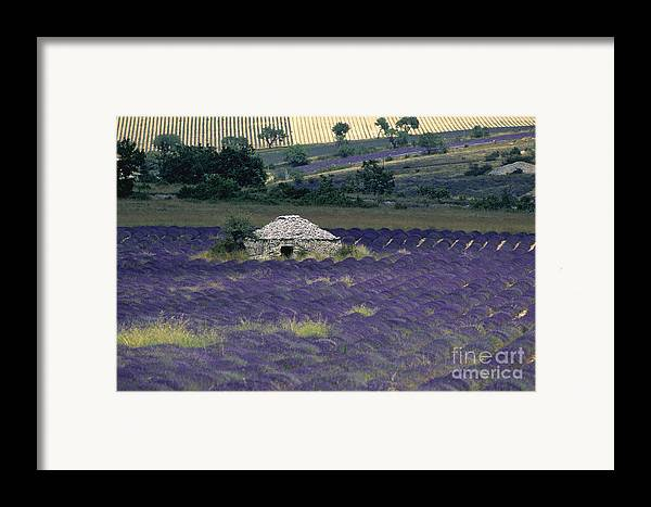Touristic Framed Print featuring the photograph Field Of Lavender. Sault by Bernard Jaubert