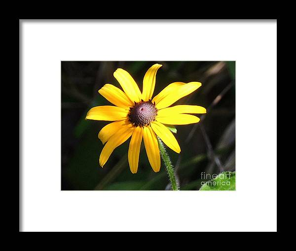 Yellow Framed Print featuring the photograph Flower by Cristy Crites