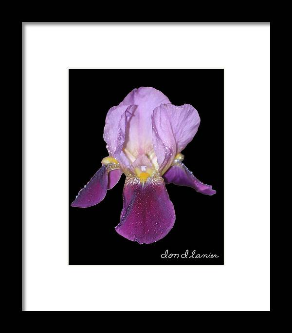 Flower Framed Print featuring the photograph Flower by Don Lanier
