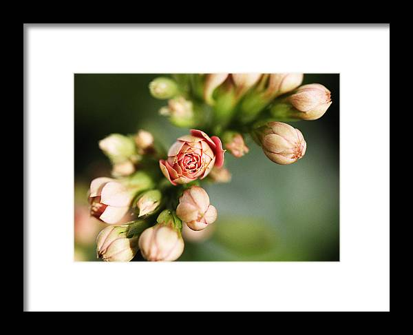 Flower Framed Print featuring the photograph Flower by Falko Follert