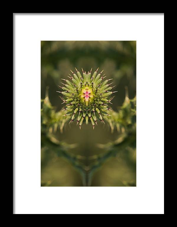 Background Framed Print featuring the digital art Flower Reflection by Odon Czintos