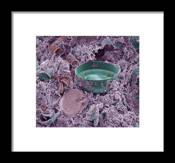 Diatom Framed Print featuring the photograph Fossilised Diatoms, Sem by Steve Gschmeissner
