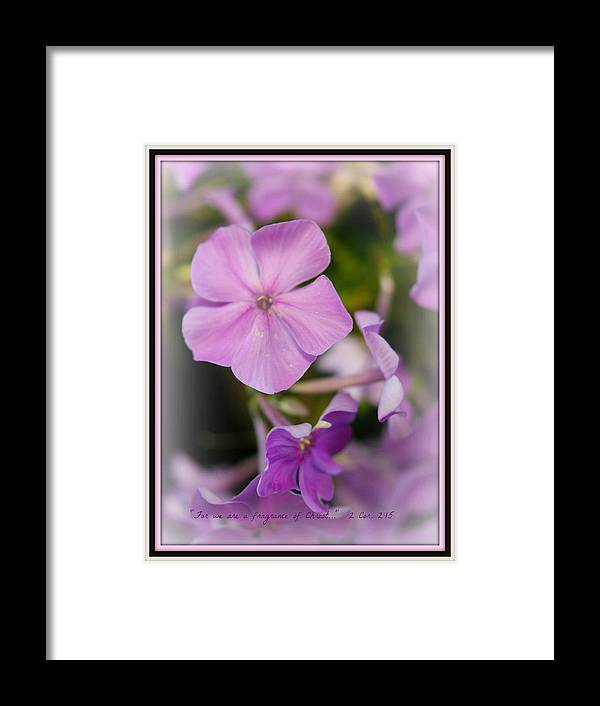 Flowers Framed Print featuring the photograph Fragrance by Joyce Rose