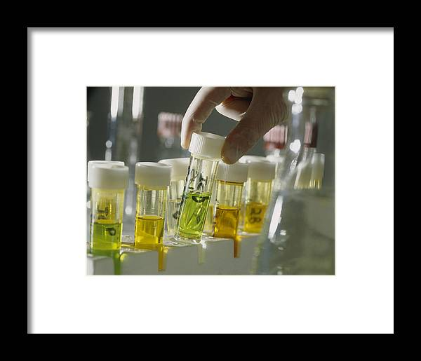 Sample Framed Print featuring the photograph Gloved Hands Selecting A Vial For Analysis by Tek Image