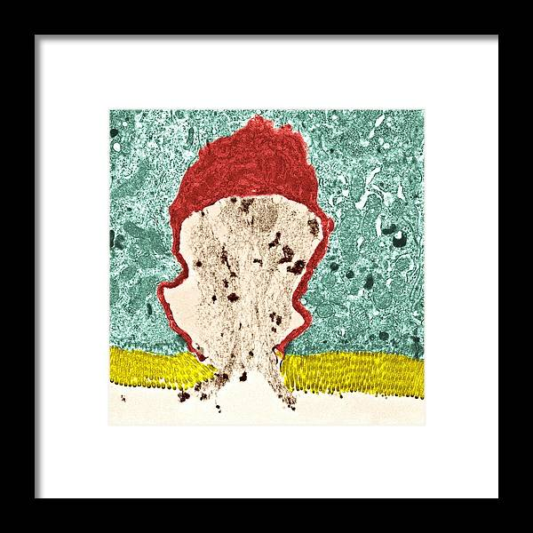 Goblet Cell Framed Print featuring the photograph Goblet Cell by Steve Gschmeissner
