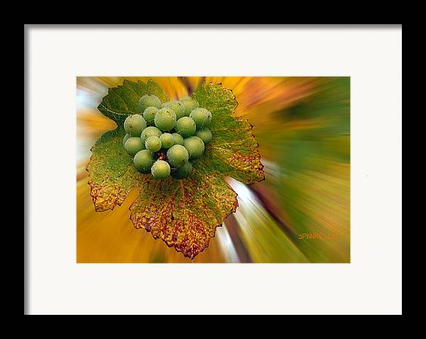 Vineyard Framed Print featuring the photograph Grapes by Jean Noren