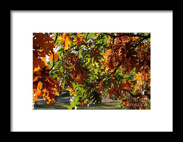 Outdoors Framed Print featuring the photograph Green And Gold by Susan Herber