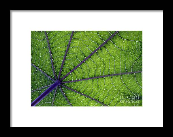 Garden Framed Print featuring the photograph Green Leaf by Urban Shooters