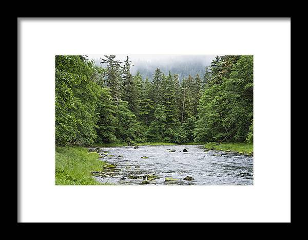 Mp Framed Print featuring the photograph Grizzly Bear Ursus Arctos Horribilis by Konrad Wothe