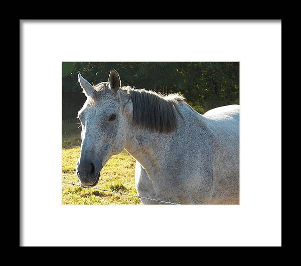Canvas Photography Prints Framed Print featuring the photograph Here's Lookin At You Kid by Laurie Kidd