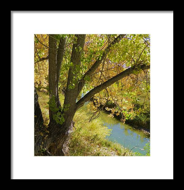 Creek Framed Print featuring the photograph Hidden Creek by Vicky Mowrer