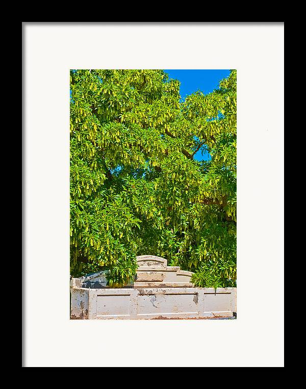 Acacia Framed Print featuring the photograph Horses No Longer This Way Come by Paul Donohoe