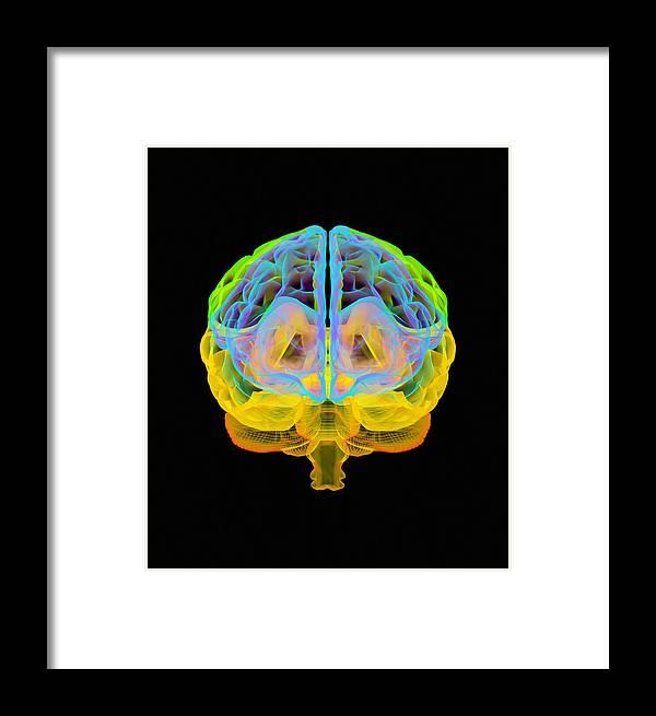 Anatomy Framed Print featuring the photograph Human Brain, Artwork by Mehau Kulyk