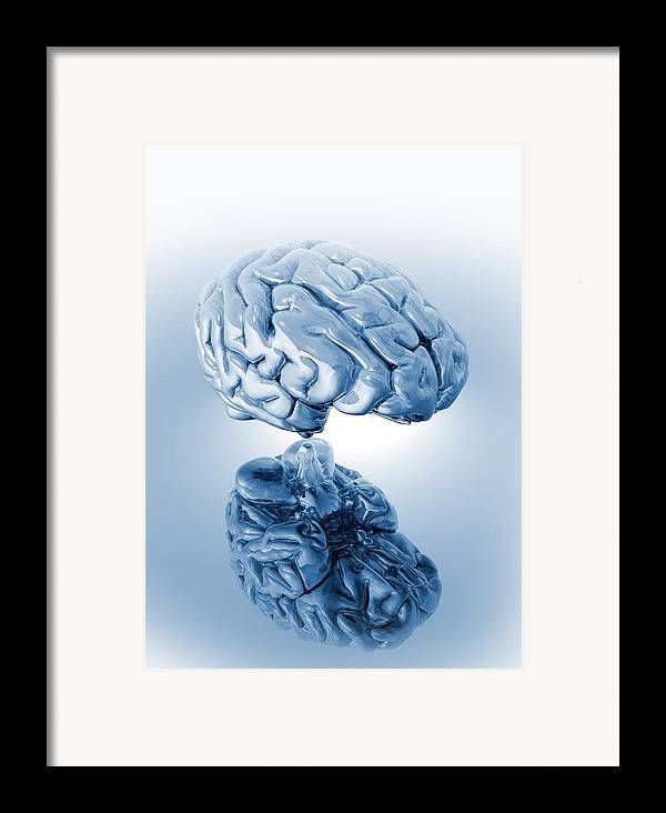 Artwork Framed Print featuring the photograph Human Brain, Artwork by Victor Habbick Visions