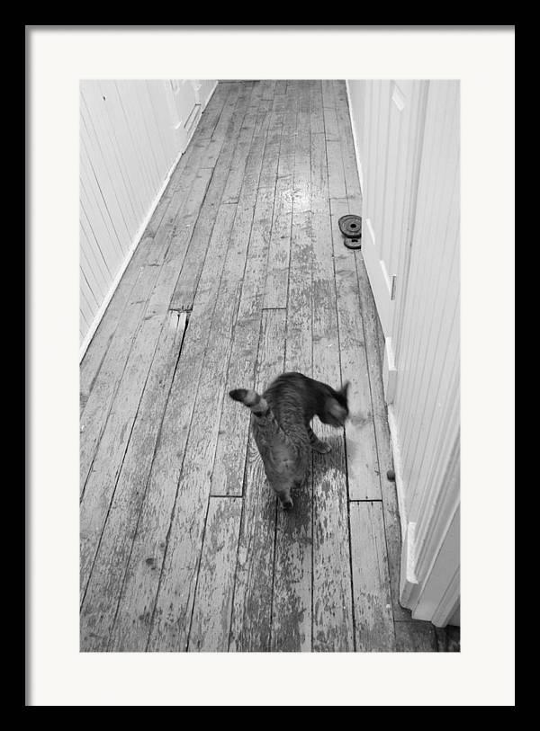 Cat Framed Print featuring the photograph Kitty by Nina Mirhabibi