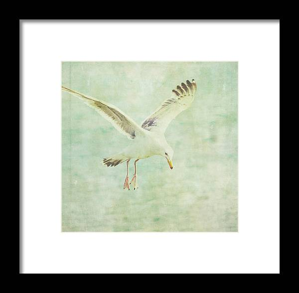 Seagull Framed Print featuring the photograph Landing by Rebecca Cozart