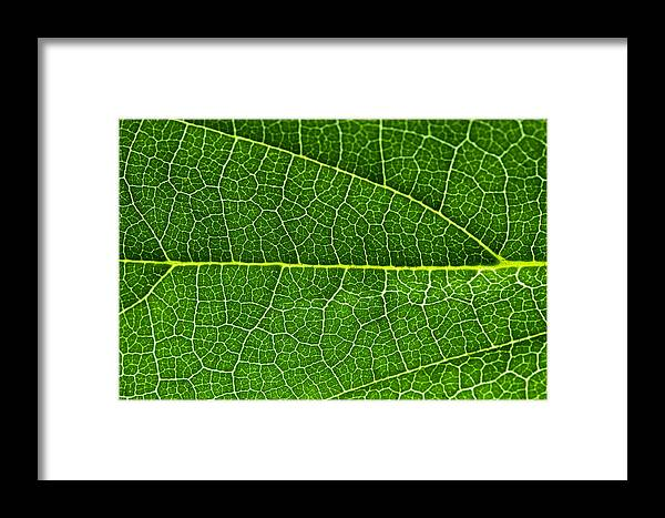 Macro Framed Print featuring the photograph Leaf by Fabrizio Troiani