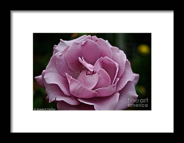 Garden Framed Print featuring the photograph Lovely Lavender by Susan Herber