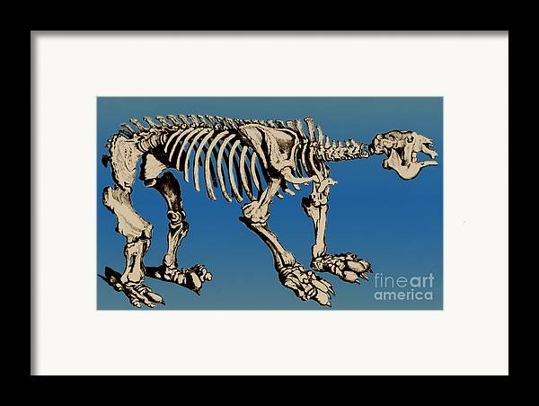 History Framed Print featuring the photograph Megatherium Extinct Ground Sloth by Science Source
