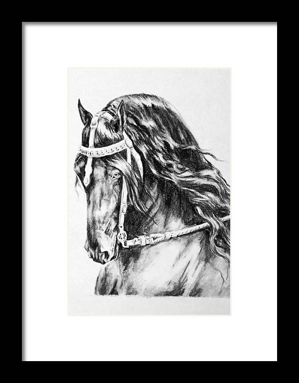 Horse Friesian Framed Print featuring the drawing Mintse by Jennifer Vanderploeg