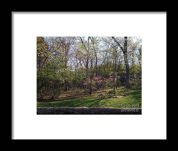 Springtime Framed Print featuring the photograph New Beginnings by Barbara Plattenburg