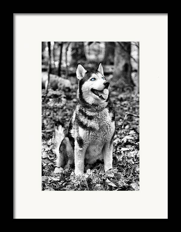 Ole Blue Eyes Framed Print featuring the photograph Ole Blue Eyes by JC Findley