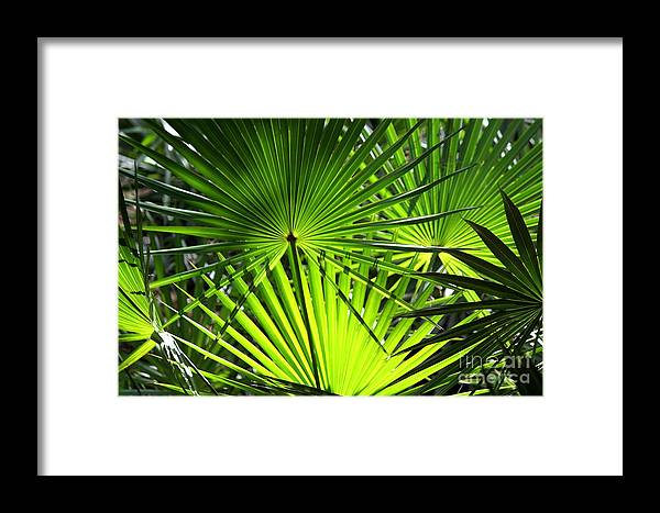 Framed Print featuring the photograph Palmettos by Theresa Willingham